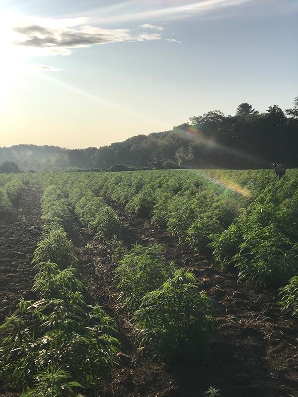New England Hemp Farm